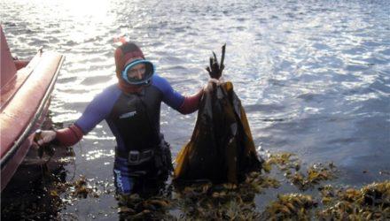 Гипоаллергенный заменитель сахара из водорослей Белого моря